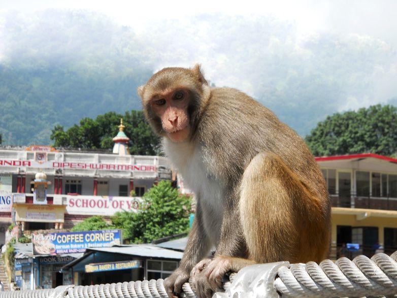 Asociación Merkhaba, viaje fotográfico a India.
